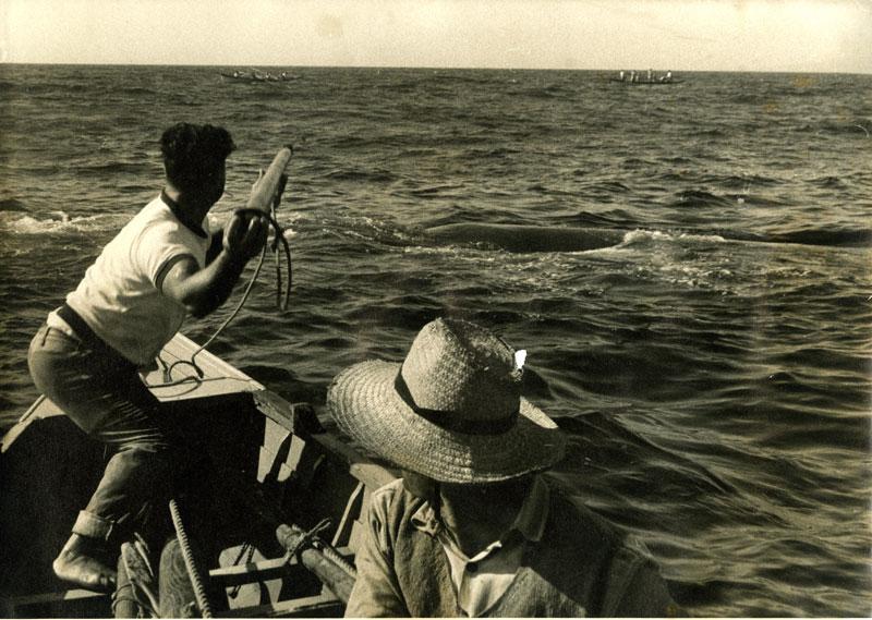 Cena de caça à baleia: arpoamento