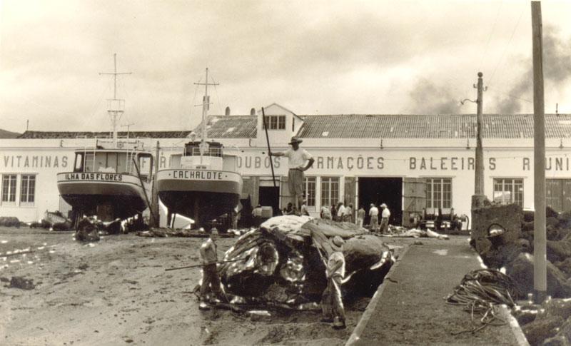 """Trabalhos de desmancho no pátio da Fábrica da Baleia """"Armações Baleeiras Reunidas, Lda"""". São Roque do Pico"""