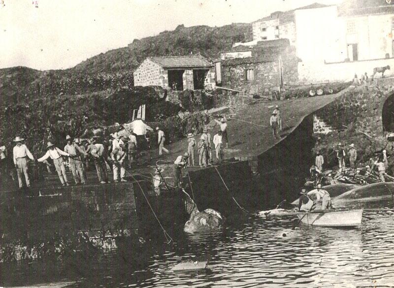 Trabalhos de esquartejamento e de desmancho no Porto baleeiro da Calheta de Nesquim. Ilha do Pico